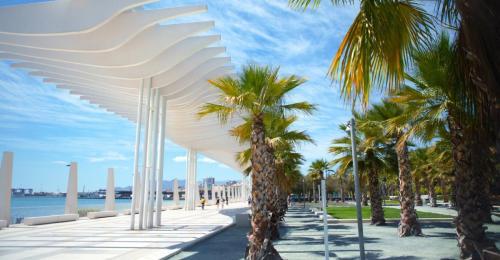 palmeras muelle 1